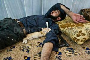 Cat having a nap beside a fighter from the Free Syrian Army
