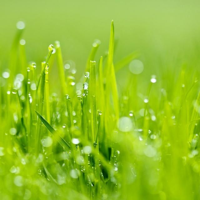 Grass_wallpapers_121