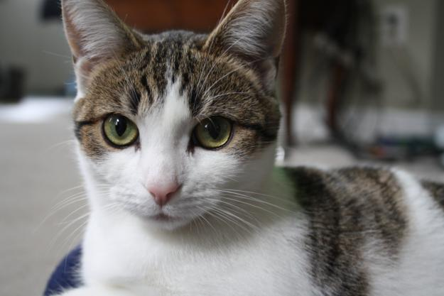 This is not our cat Susu, but she resembles her.